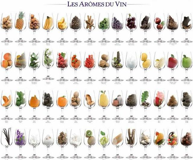 Palette des arômes du vin.