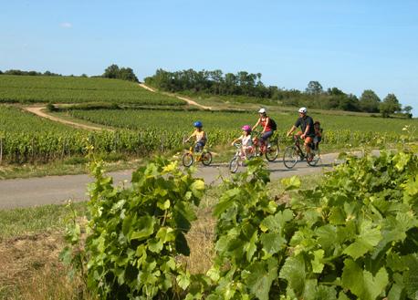 Cyclistes dans les vignes