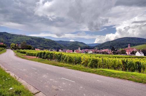 Paysage d'une vigne de la route
