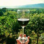 verre de vin dans un vignoble