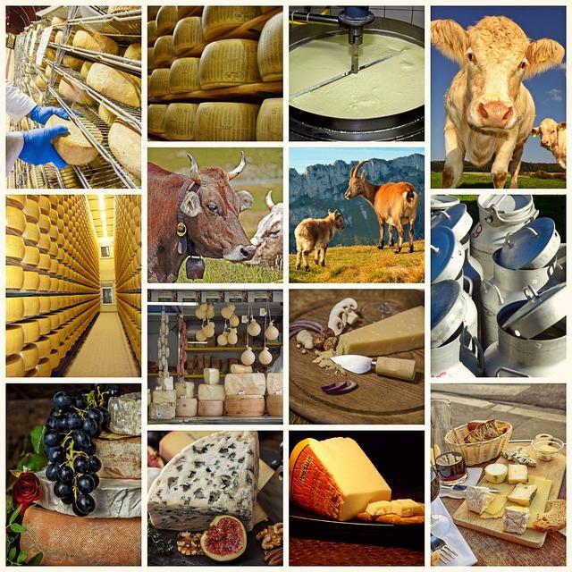 Camaïeu de photo sur la fabrication du fromage