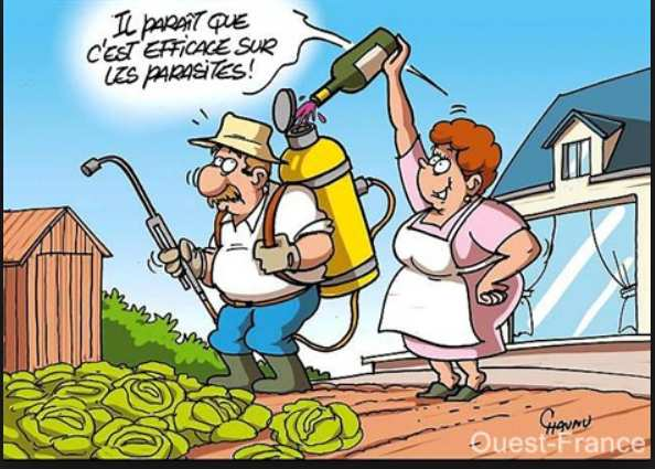 BD - Un femme met du vin dans l'arroseur plein de pesticide de son mari en disant que c'est bon pour les parasites.