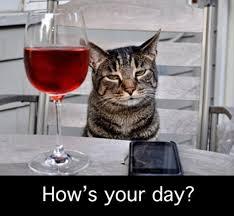 Comment était ta journée ? Demande un chat dernière un verre de vin et assis sur un chaise.