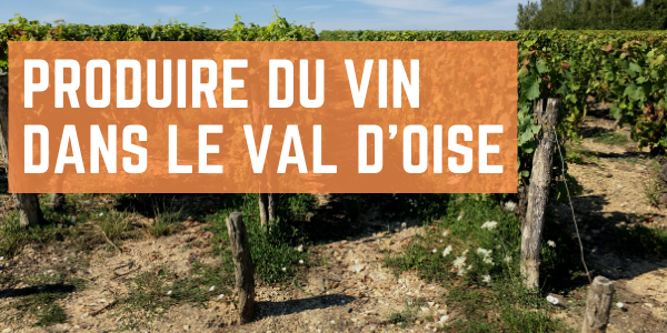 La production de vin dans le Val d'Oise