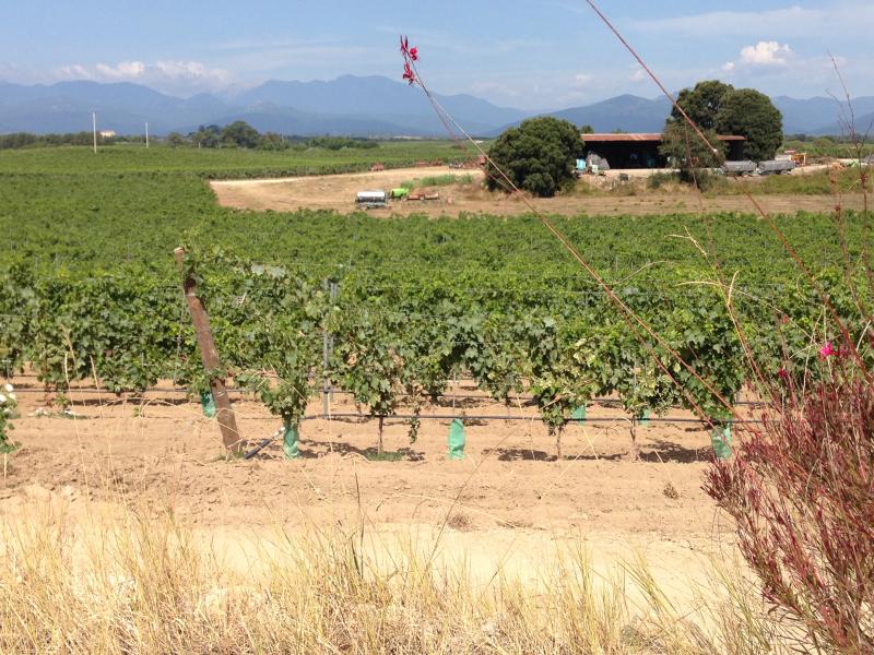 Vue du domaine Terra Vecchia avec des vignes et des bâtiments agricoles