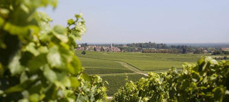 Vignoble de Bourgogne de la cote chalonnaise