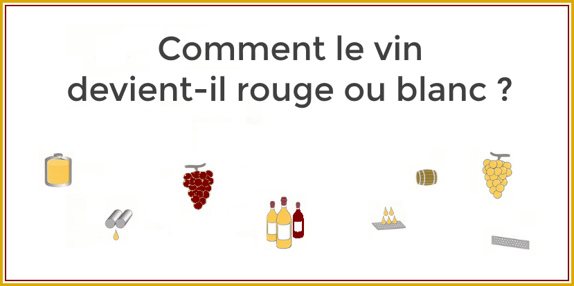 Comment fait-on du vin rouge ou blanc ?