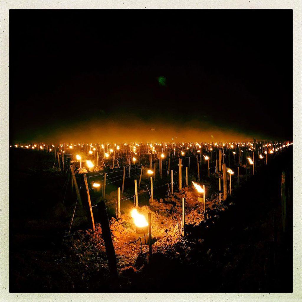 bougies dans les vignes en POUILLY FUMÉ - Serge Dagueneau